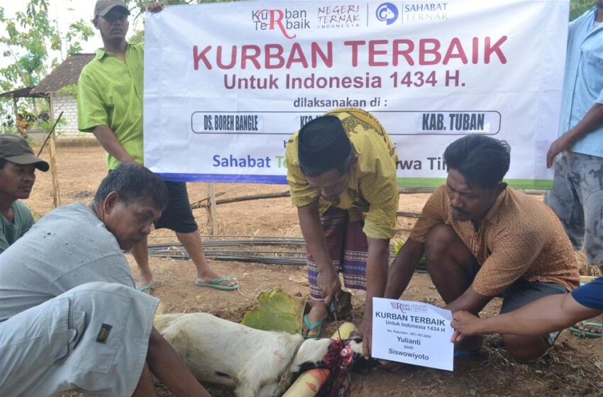 Distribusi Kurban Terbaik di Tuban Jawa Timur